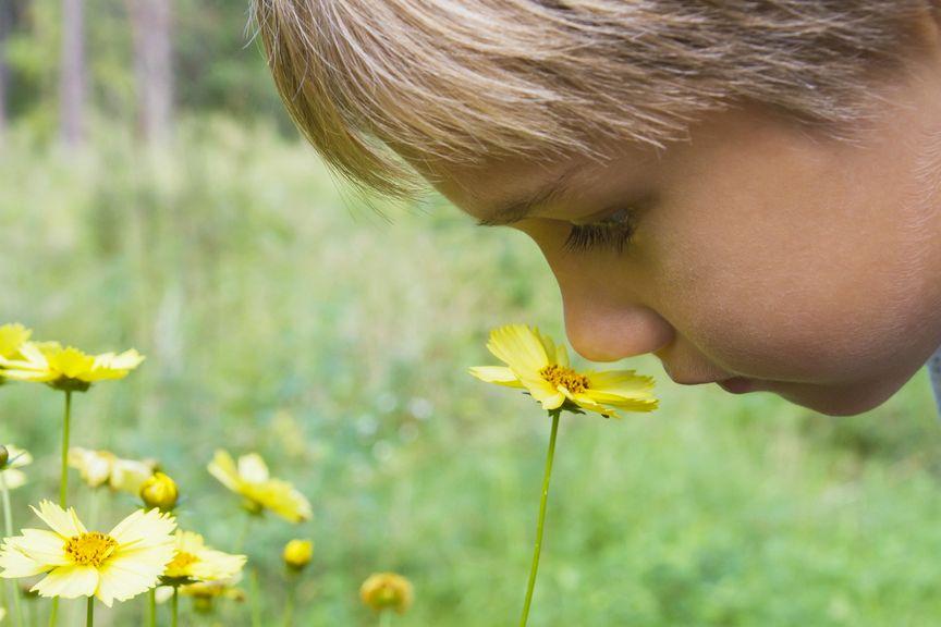 Kind riecht an einer Blume