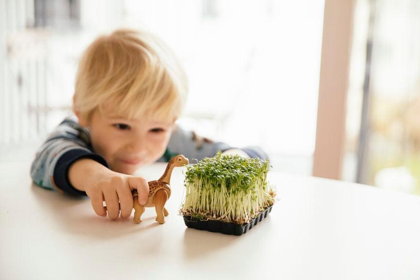 Kind mit Dinosaurier und Kressesprossen