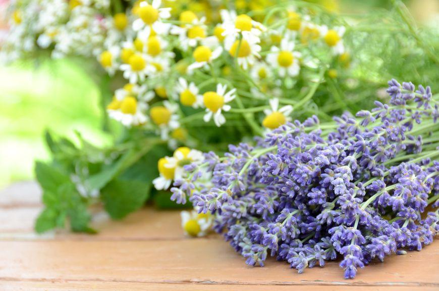 Lavendel, Kamille und Melisse