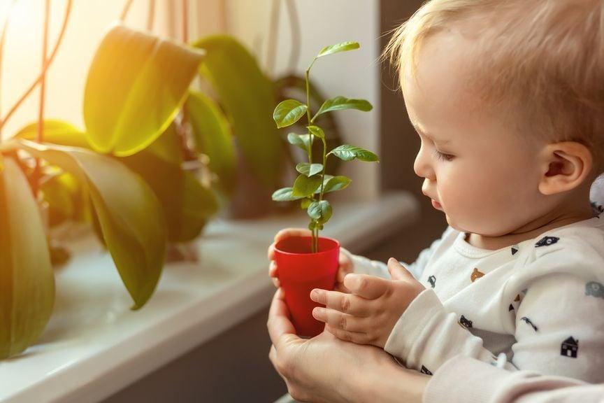 Kind schaut Pflanze an