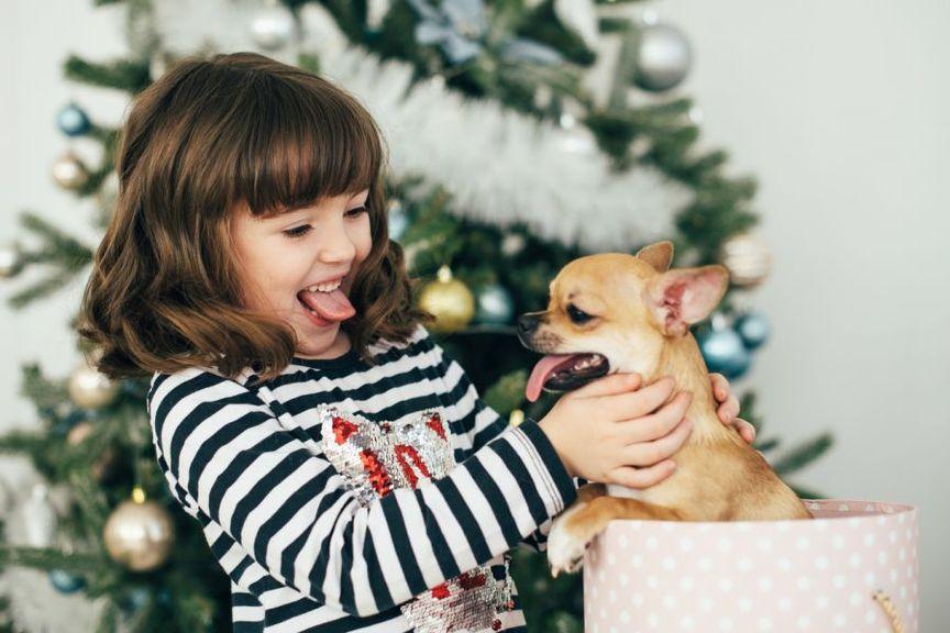 Weihnachtsgeschenk Hund
