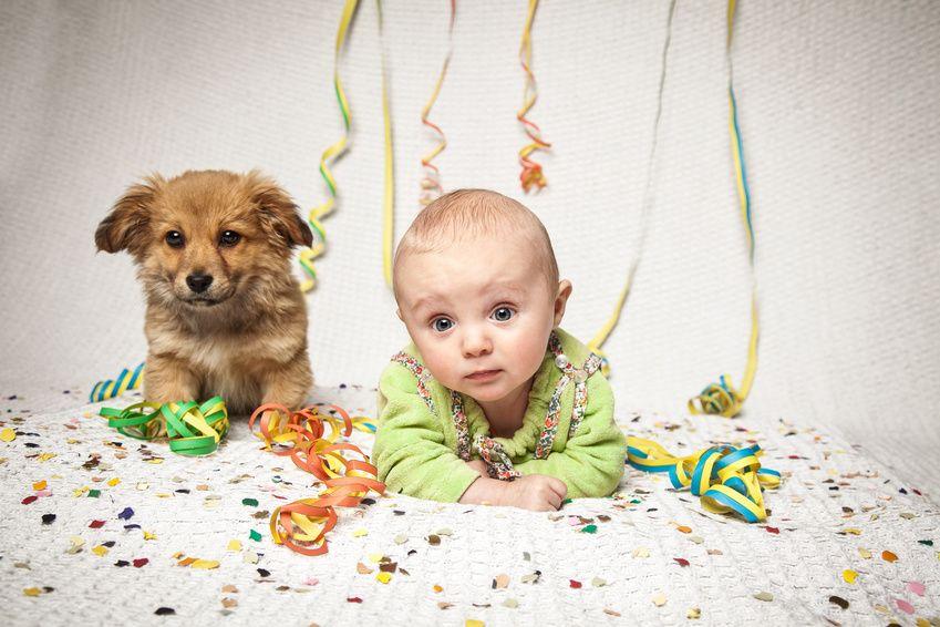 Hund und Baby feiern