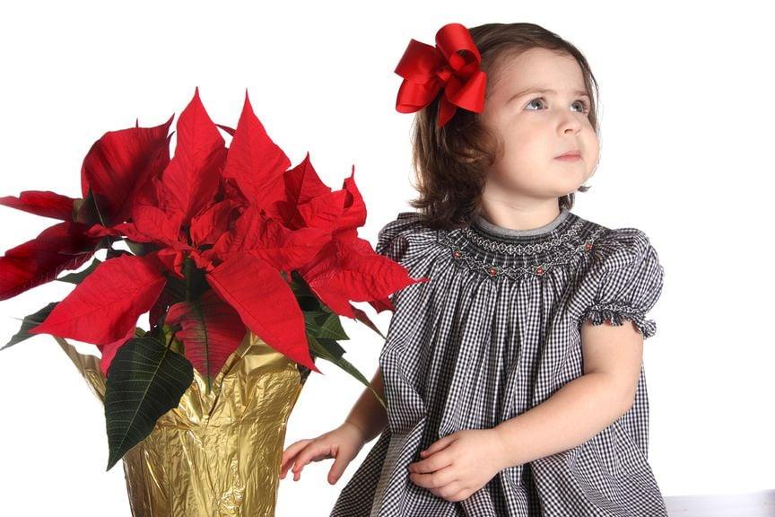 Mädchen mit Weihnachtsstern,[Translate to FR:] IStock 173604651