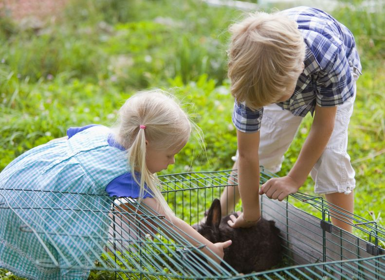 Kinder holen ein Kaninchen aus dem Käfig