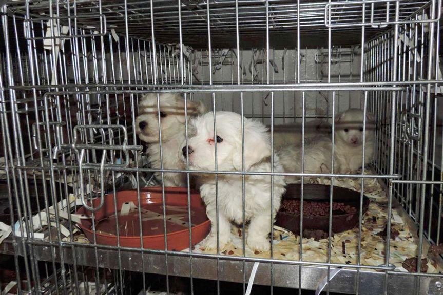 Junge Hunde in einem Metallkäfig