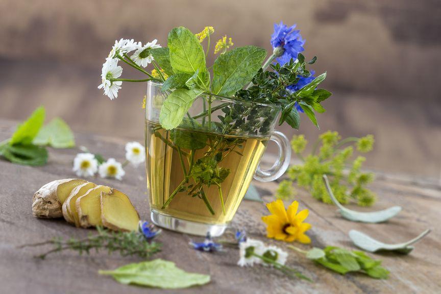 Glastasse mit Tee und Kräutern