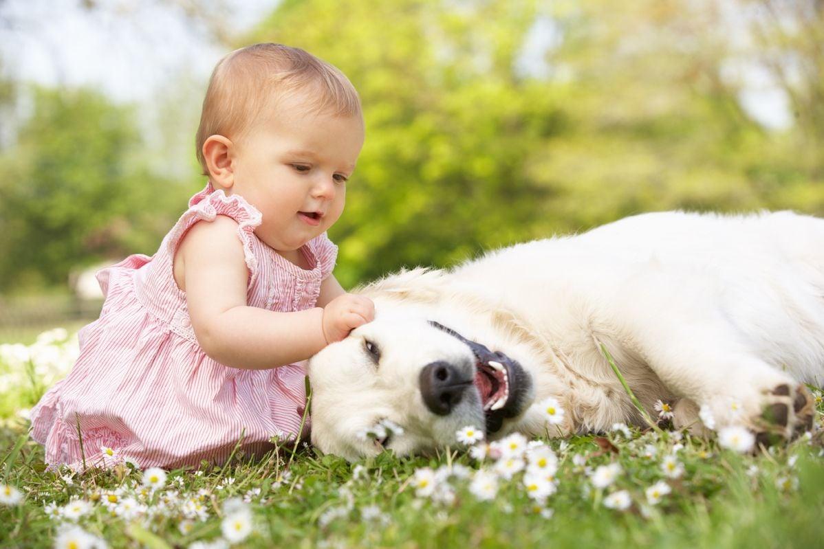 Baby streichelt Hund auf der Wiese,Kind sitzt sitz im Garten mit Hund