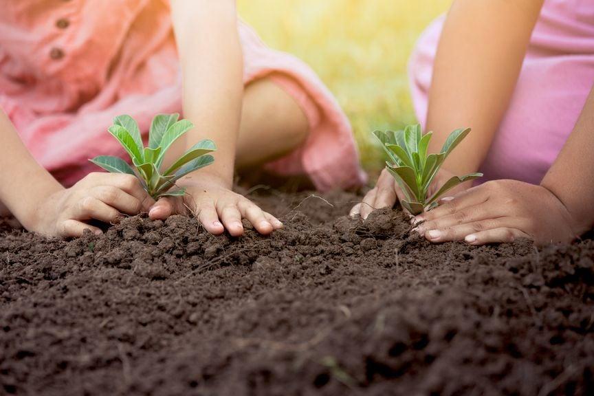 Kinder pflanzen Setzlinge
