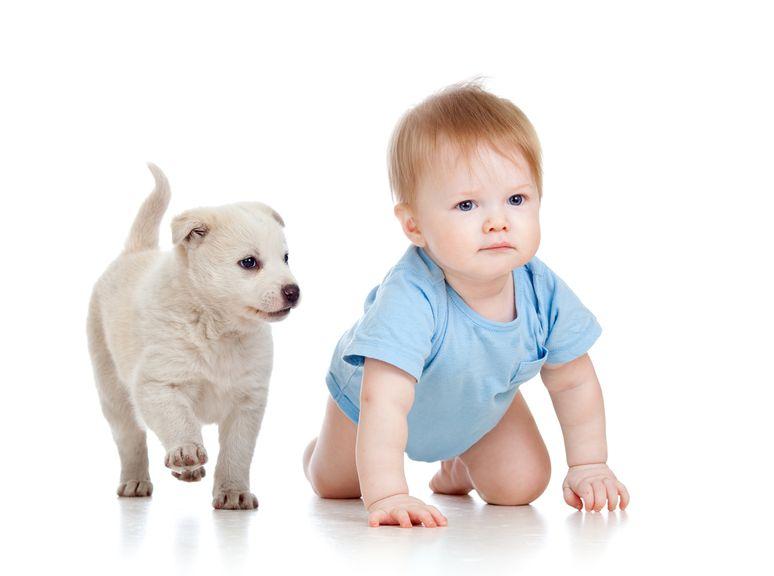 Baby krabbelt neben Hundewelpen